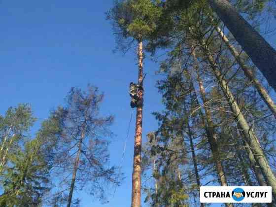 Спил аварийных деревьев. Частями и целиком Рощино
