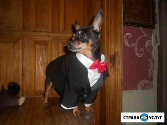 Пошив одежды для животных Киров