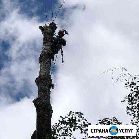 Произвожу спил деревьев Рыбинск