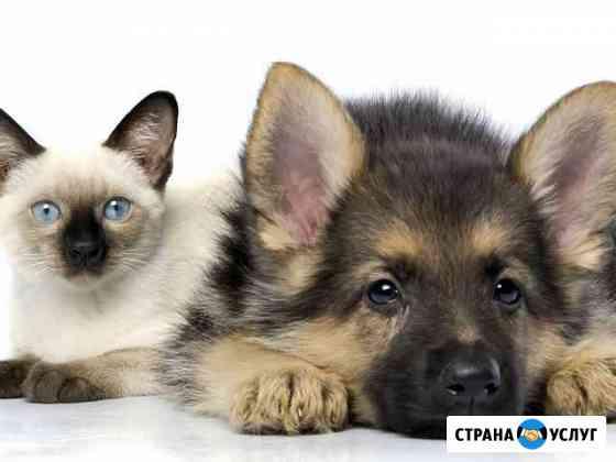 Передержка домашних животных Нижний Новгород