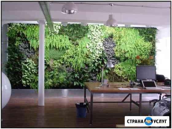 Вертикальное озеленение, стабилизированный мох Санкт-Петербург