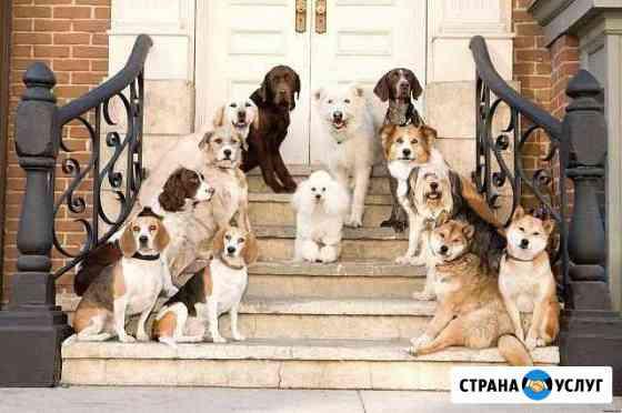 Гостиница для животных Благовещенск