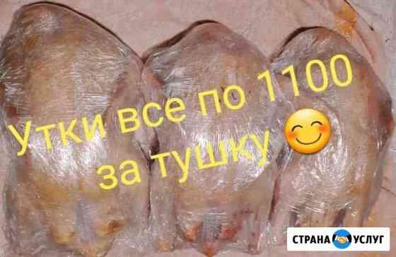 Мясо Утки(Муларды) Саранск