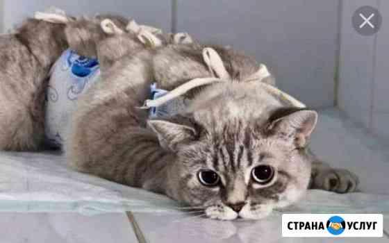 Ветеринарный врач. Вызов на дом Ижевск