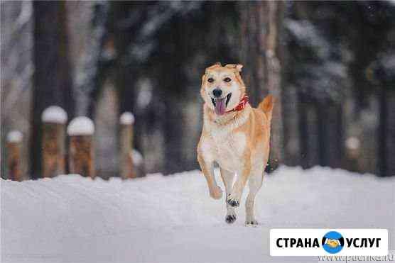 Выгул Собак Бузулук