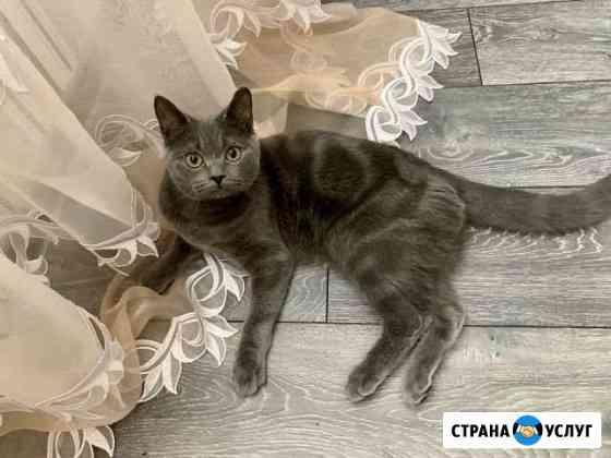 Кот на вязку Оренбург