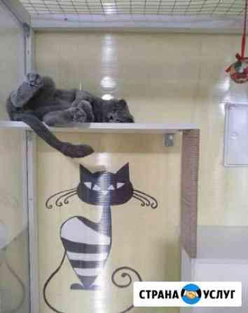 Гостиница, передержка животных-кошек, собак Нижний Новгород