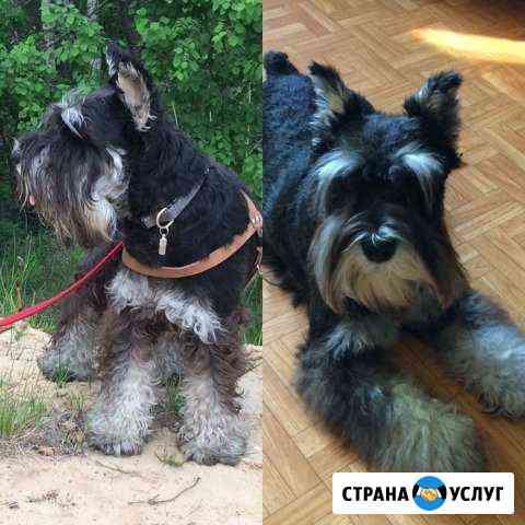 Передержка собак / Выгул собак / Няня для собаки Нижний Новгород