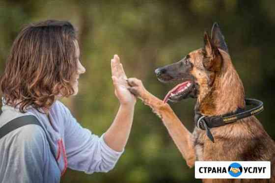 Дрессировка собак Киров