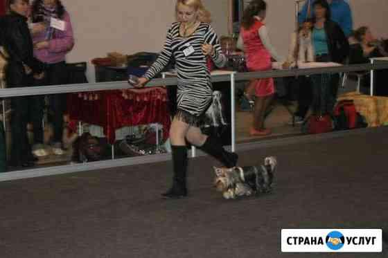 Хендлинг для собак Нижний Новгород
