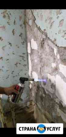 Удаляю грибок,плесень со стен,в квартирах.Восстано Владивосток