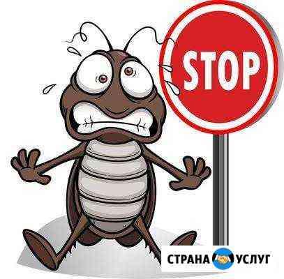 Уничтожение насекомых, тараканов, клопов, муравьев Комсомольск-на-Амуре