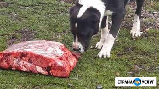 Свиные и говяжьи обрезы Мещовск