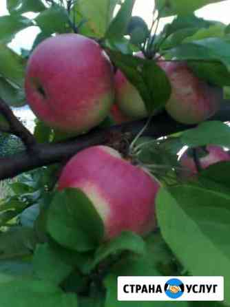 Весенняя обрезка вашего плодового сада Коломна
