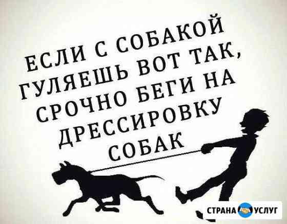 Профессиональная дрессировка собак Ставрополь