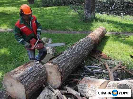 Спил Деревьев Усть-Лабинск