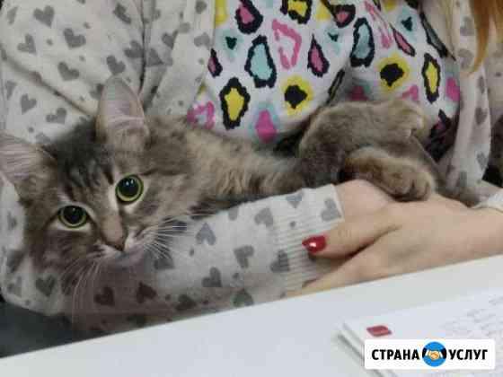 Ветеринарный врач на дом Нижний Новгород