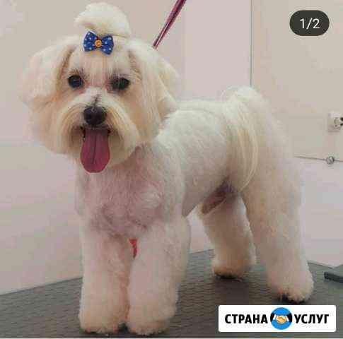 Стрижка собак Армавир