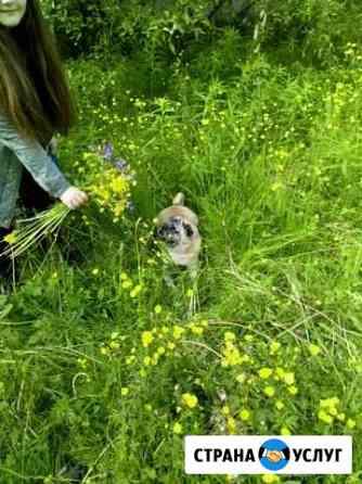 Передержка для домашних животных Росляково