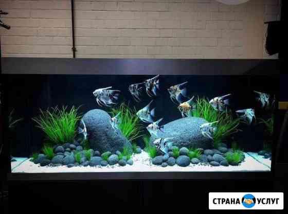 Обслуживание аквариума Астрахань