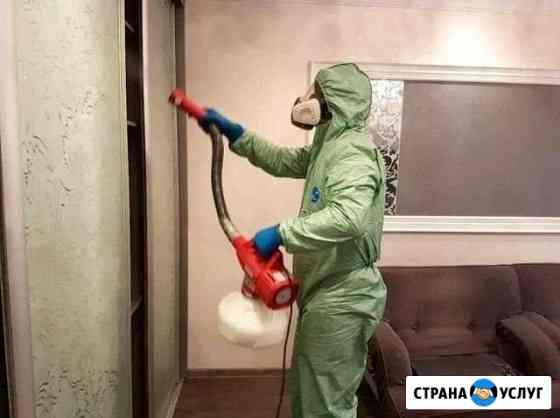 Уничтожение тараканов, клопов, муравьёв Красноярск