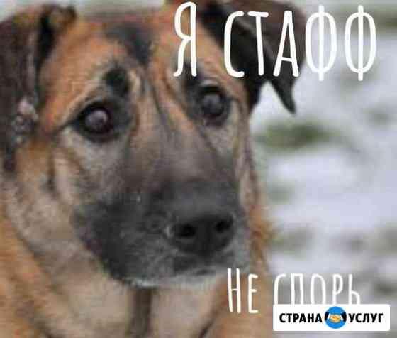 Перевозка животных Кострома