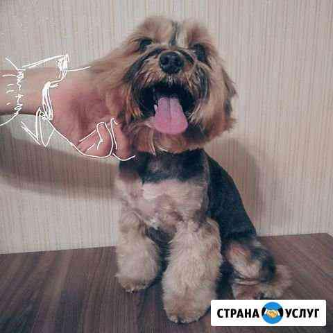 Стрижка собак. Уз- чистка зубов. Йорк, шпиц и др Нижний Новгород