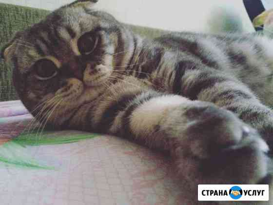 Кот на вязку Майкоп