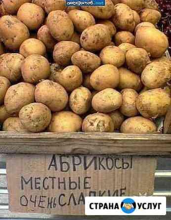 Стихи, поздр., лозунги Брянск
