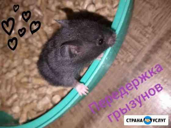 Передержка грызунов Томск
