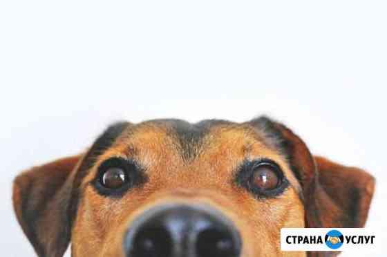 Ветеринарный врач на дом Лузино