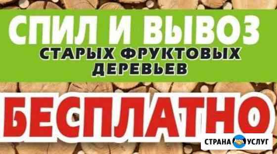 Спил и вывоз старых фруктовых деревьев. бесплатно Брянск