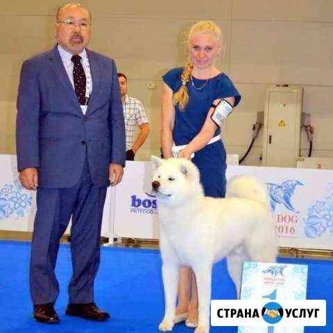Дрессировка, хендлинг, груминг Нижний Новгород