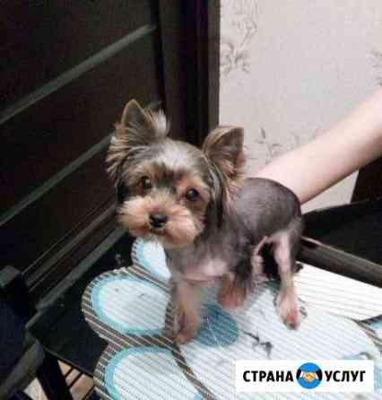 Стрижка собак и кошек Вологда