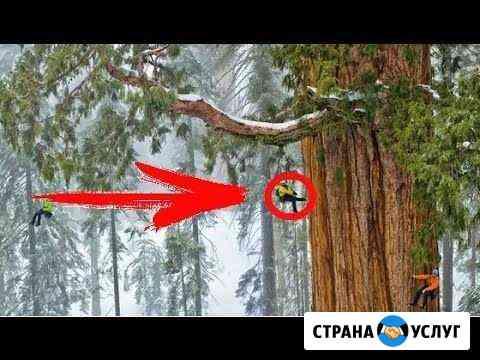 Кронирование и удаление деревьев Севастополь