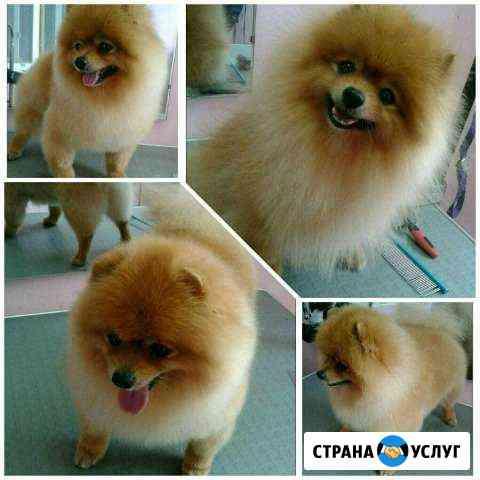 Стрижка собак Хабаровск