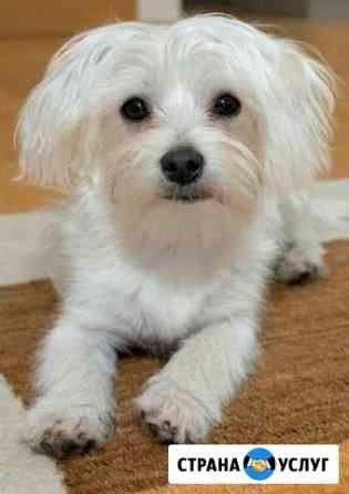Квартирная передержка для маленьких собак Хабаровск