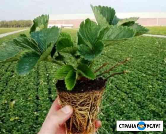 Выращивание рассады Сочи