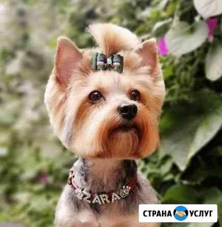Стрижка собак. Груминг Елец