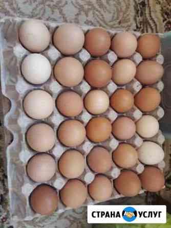 Яйца домашние Рязань