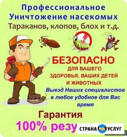 Дезинсекция, Уничтожение клопов, тараканов и тд Бийск