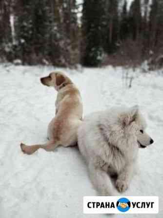 Выгул собак Воткинск