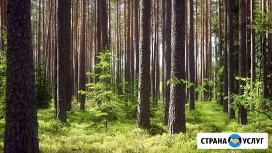 Лес на коню, пиловочник Красноярск