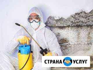 Уничтожение клопов, муравьёв, тараканов, мышей Пенза