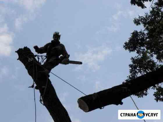 Спил деревьев любой сложности. Расчистка участков Севастополь