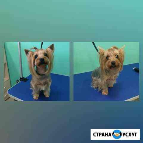 Груминг (стрижка, мытье животных) Томск