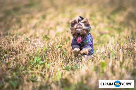 Стрижка собак мелких пород Мценск