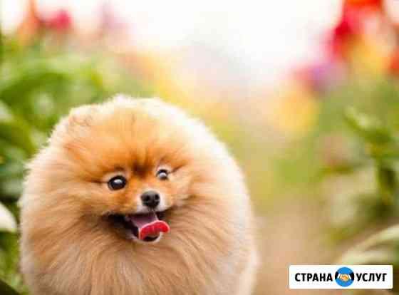 Выгул собак Петрозаводск