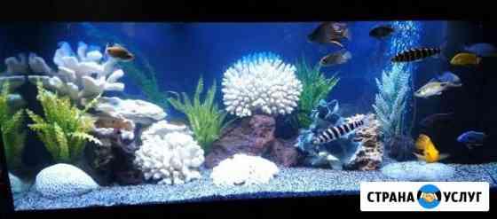 Запуск оформление аквариума. Декорации в наличии Пенза