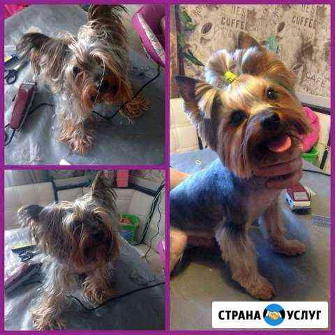 Стрижка собак Архангельск